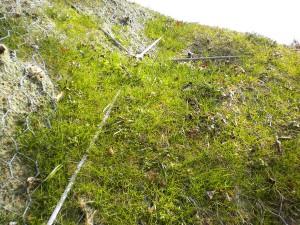 idrosemine rinverdimenti terre rinforzate Rinverdimento di scarpate dopo consolidamento con reti paramassi Brogliano