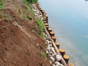 opere in legname ingegneria naturalistica Opere in legname a difesa spondale in un laghetto Castelfranco Veneto