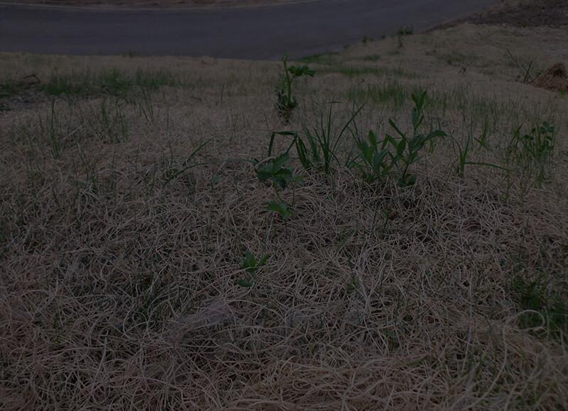 Protezione del terreno - idrosemine e rinverdimenti