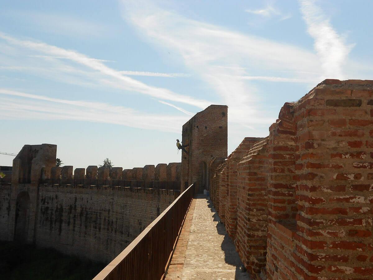 lavori su edifici lavori in fune Pulizia delle mura da erbe infestanti Cittadella Padova